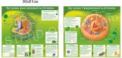 Будови рослинної та тваринної клітин