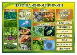 Стенд «Царства живої природи»
