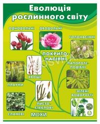 Стенд «Еволюція рослинного світу»